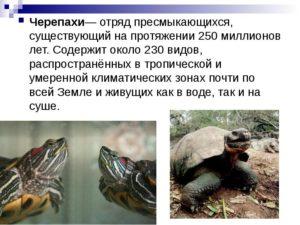 Реферат по биологии черепахи