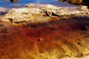 Загрязнение Мирового океана тяжелыми металлами