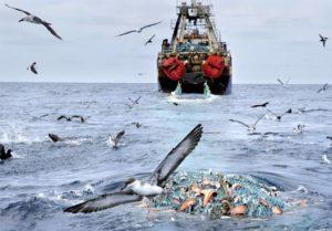 использование мирового океана