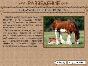 Продуктивное коневодство Мясная продуктивность лошадей