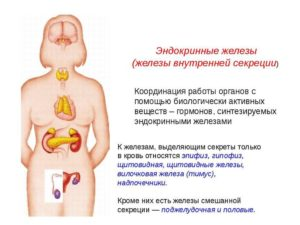ЖЕЛЕЗЫ ВНУТРЕННЕЙ СЕКРЕЦИИ (эндокринные железы)