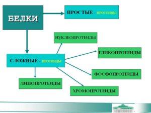 Биохимия Белков