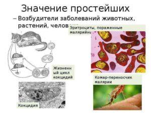 Экология простейших возбудителей заболеваний человека
