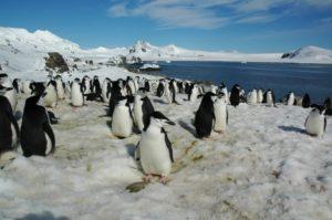 Материк Антарктида