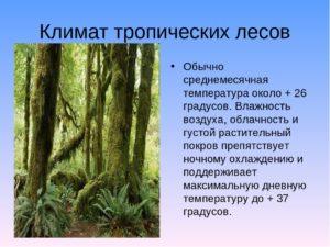 Реферат на тему: Животный мир вечнозеленых тропических лесов
