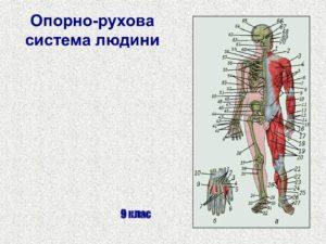 Опорно-рухова система
