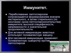 РЕФЕРАТ Тема: Лептоспироз