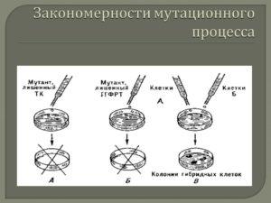 Закономерности мутационного процесса