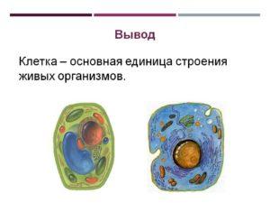 Клеточное строение живых организмов