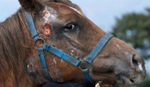 Мыт лошадей