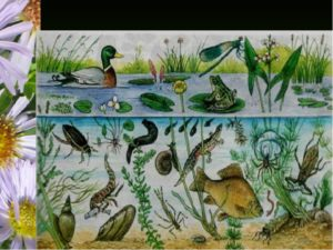 Сообщество (биоценоз), экосистема