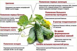 Определение овощных растений по всходам и первому настоящему листу