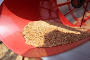 Попередня очистка зерна і насіння