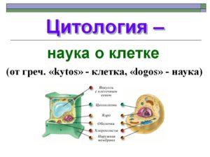 Цитология наука о клетке