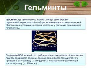 Гельминты – это паразитические многоклеточные организмы