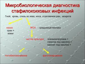Диагностика стафилококковых инфекций
