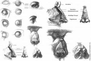 Пластическая анатомия глаза, уха, носа, рта