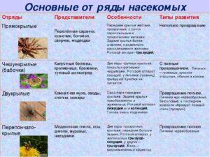 Многообразие насекомых – особенности их поведения, образ жизни ряда видов, опасные для человека насекомые