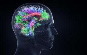 Деятельность мозга