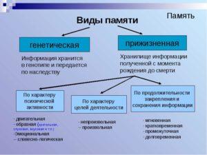 Виды памяти и их особенности