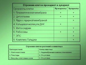 Химическая организация, строение и функции клетки эукариотов и прокариотов