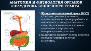 АНАТОМИЯ И ФИЗИОЛОГИЯ ОРГАНОВ ПИЩЕВАРИТЕЛЬНОГО ТРАКТА