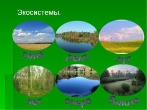 Экосистемы