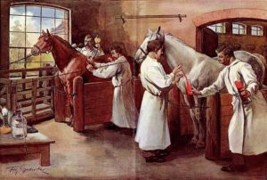 История ветеринарной медицины