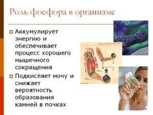 РОЛЬ ФОСФОРА В ОРГАНИЗМЕ КРС