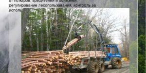 Экономика лесного хозяйства
